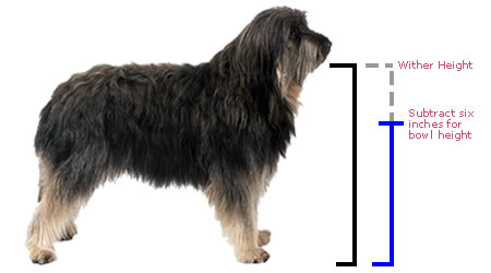 How to measure your dog for what size feeder you should buy