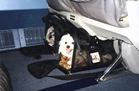 Sherpa faq for Airlines that allow dogs in cabin