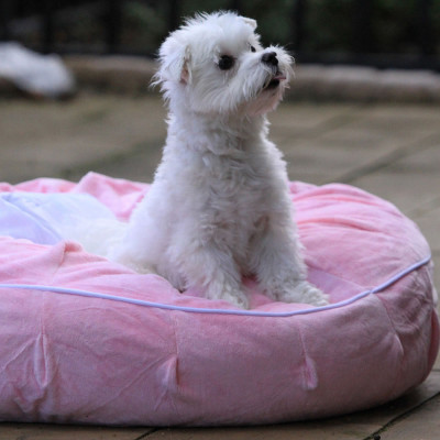 Teafco Otto Ruff & Ready Puff Pet Bed with Cooling Pad
