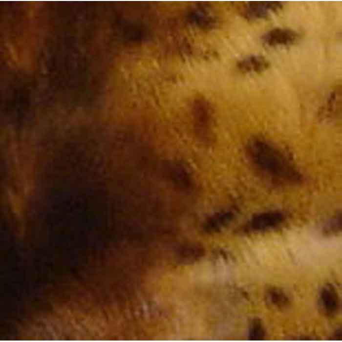 Animal Print Orthpedic Bed Cover