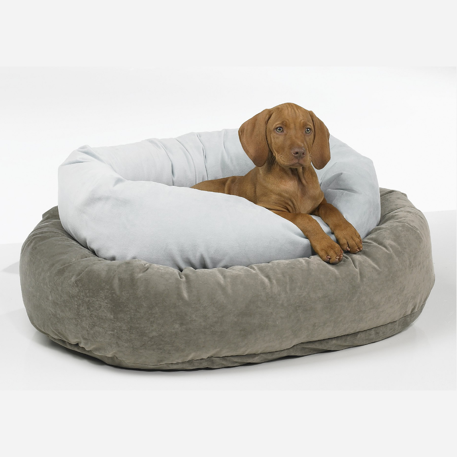 large  extra large dog beds for sale  precious pets paradise - bowsers platinum collection donut pet bed
