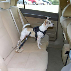 Bergan Travel Harness Blue Small